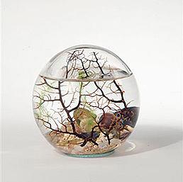 Bio sphère gorgone