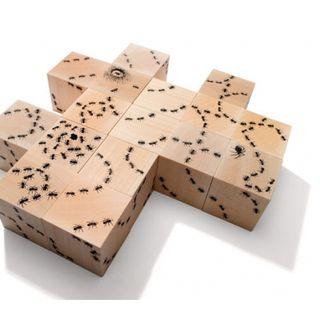 Cubes fourmis